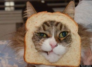 bread-and-cat